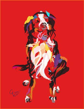 Hund Iggy