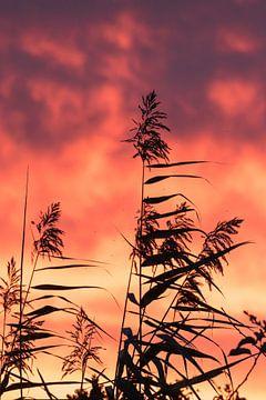 Vuur in de lucht! van As Janson
