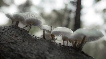 Paddenstoelen in het bos von Dirk van Egmond