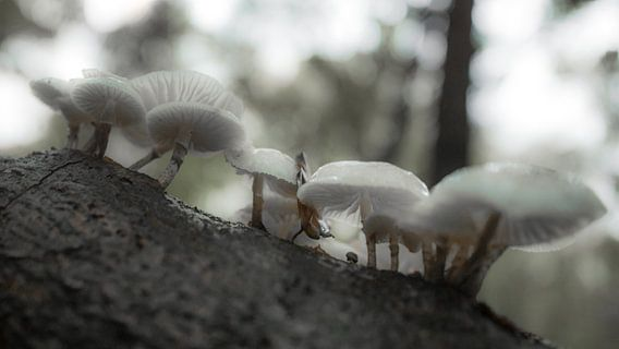 Paddenstoelen in het bos van Dirk van Egmond