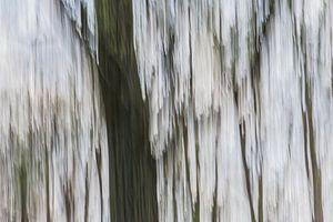 bewogen bomen en bos