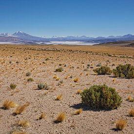 Uitzicht over het Natuurreservaat Salar de Tara, San Pedro de Atacama, Chili van Tjeerd Kruse