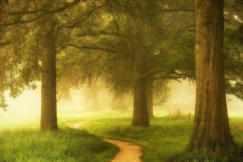 Path of Awakening van Lars van de Goor
