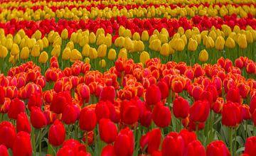 Tulpen rot und gelb von Andy Luberti