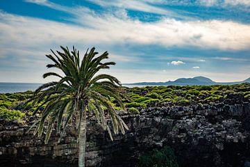Palmen-Urlaubsgefühl auf Lanzarote von Pictorine