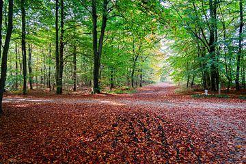 Herfst van Jaap Burggraaf