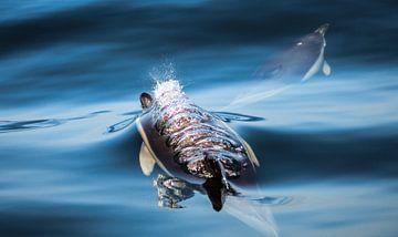 Dolfijnen van Cecile van Essen