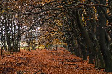 Tunnel der Bäume von Marc Molenaar