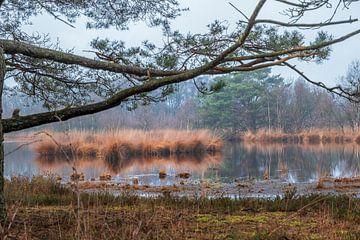 Sumpf / Teich im Wald von Miranda Heemskerk