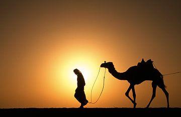 Wüste Sahara. Beduin mit Kamel bei Sonnenuntergang von Frans Lemmens
