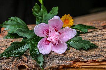 Blumen auf Holz von Devlin Jacobs