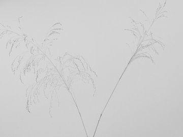 Gräser von Hanneke Bantje