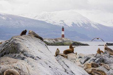 Seehunde am Beagle-Kanal von Bianca Fortuin