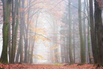 Matinée brumeuse d'automne sur Francis Dost