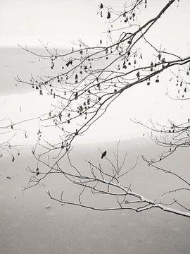 On The Frozen Pond von Lena Weisbek