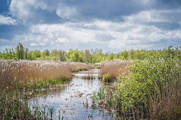 Natuurlijk landschap. van Marjan Kooistra