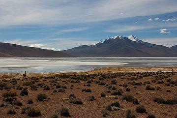 Altiplano in Bolivien mit Lama im Vordergrund und Vulkan im Hintergrund von A. Hendriks