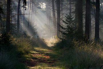 Sprookjesachtig Leenderbos van Joep de Groot