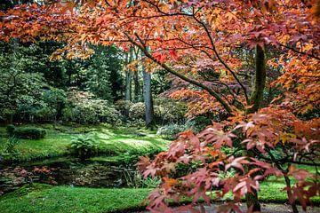 Prachtige herfstkleuren van Monique Hassink