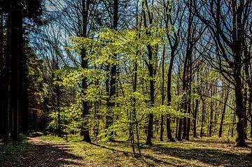 Frühling am Hochufer bei Lietzow von GH Foto & Artdesign