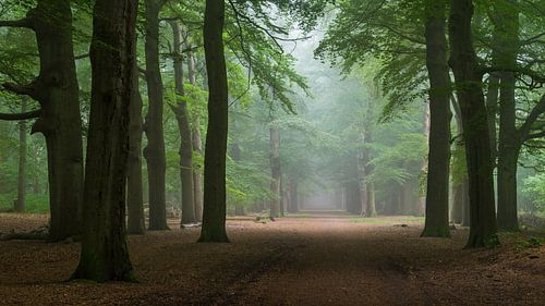 Vreedzaam groen van Tvurk Photography