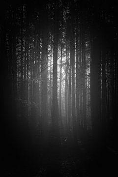 Mystischer Sonnenaufgang im Wald von Pascal Raymond Dorland