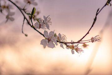 Zweig mit Blüte von Tania Perneel