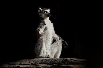 Méditation de Cat Lemur avec des yeux clairs et lumineux dans l'obscurité. Un singe pelucheux est as sur Michael Semenov