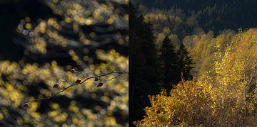 Herfst in Opper-Svanetië, een tweeluik in 1 beeld van