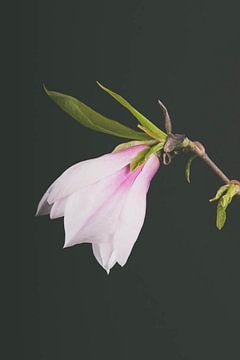 Magnolia van Lavieren Photography