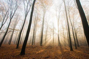 Herbstmorgen Veluwezoom von Danny Slijfer Natuurfotografie