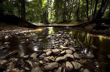 Natuur op zijn best von Richard Driessen