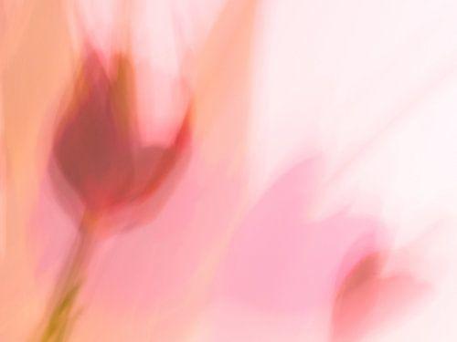 Dansende tulp.
