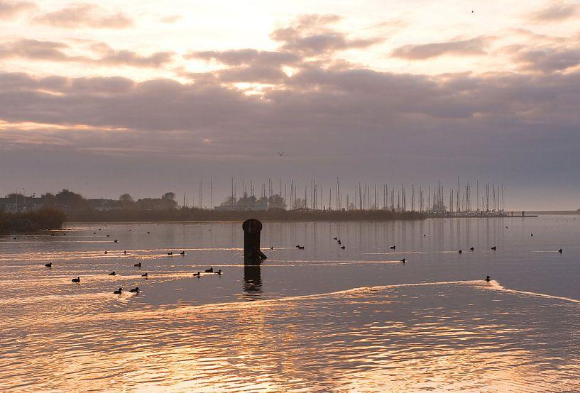 Almere de natuurgebied Oostvaardersplassen. van Brian Morgan
