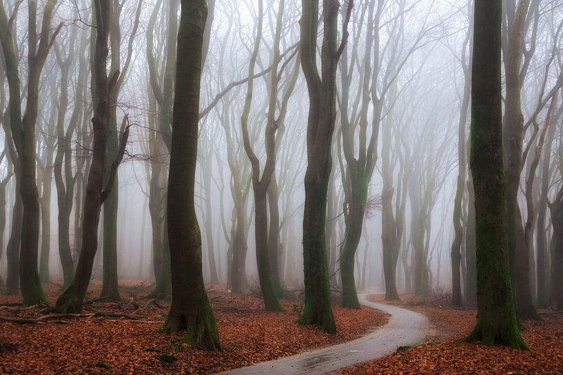Dancing in the Mist van Martin Podt