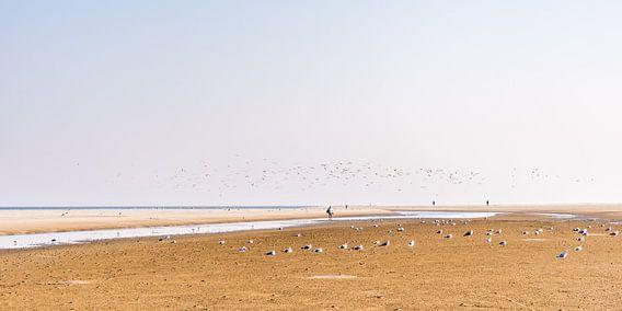 Der Strand von Schiermonnikoog mit Vögeln.