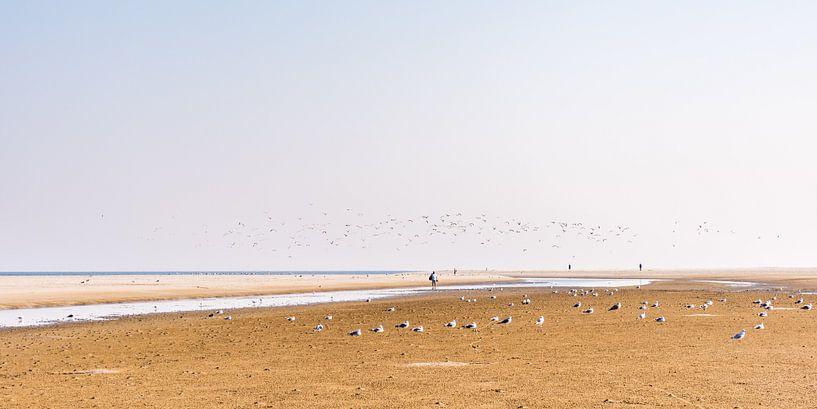 Der Strand von Schiermonnikoog mit Vögeln. von John Verbruggen