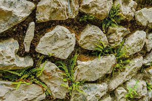 Stapel muur met mos en  mini varens van Peters Foto Nieuws l Beelderiseren