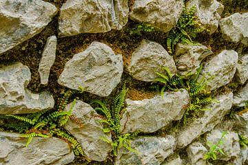 Stapel muur met mos en  mini varens