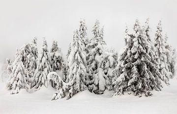 Schneebedeckte Bäume in Norwegen - 1 von Adelheid Smitt