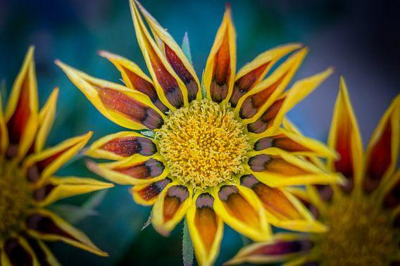 Flowers van Maarten Leeuwis