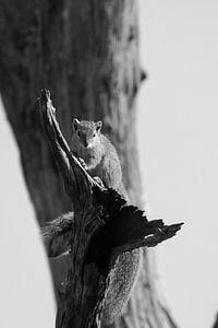 Eekhoorn in boom  van