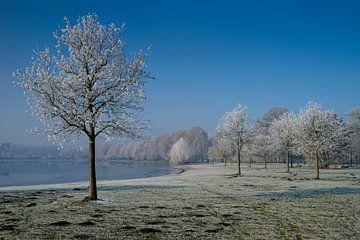 Lußsee met bomen vol rijp van Hans-Heinrich Runge