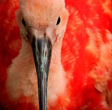 Bird von Anne Koop