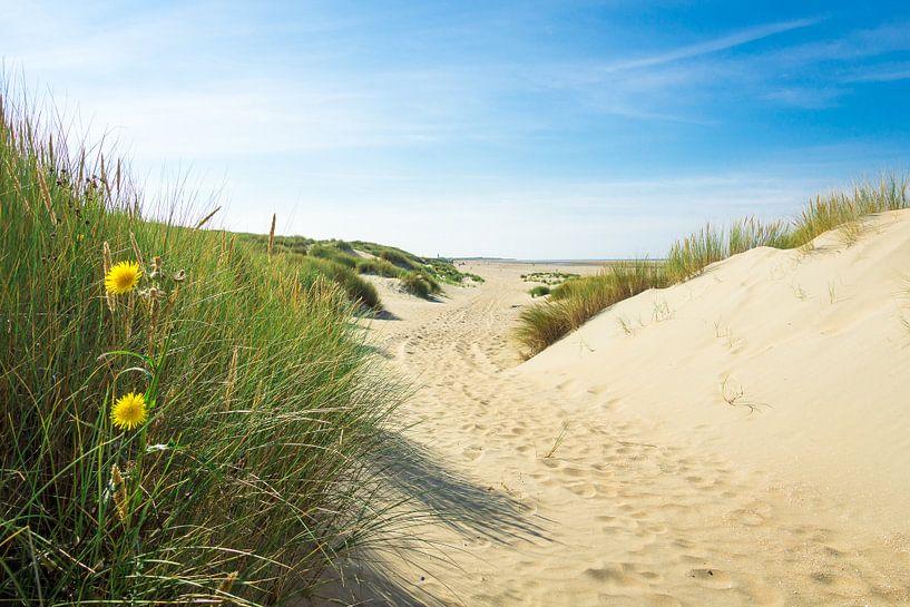 Duinen en strand van Michel van Kooten