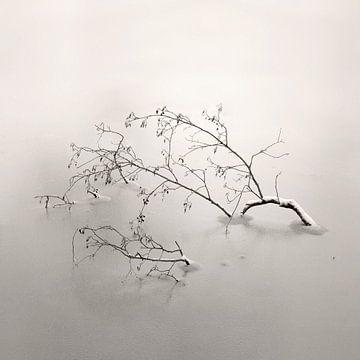 Bedded In Ice von Lena Weisbek