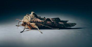 Moth sur Auke Hamers