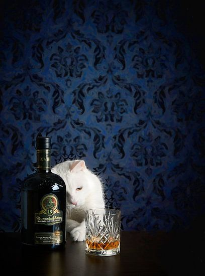 Still life with white cat and whisky