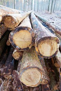 gekapte bomen