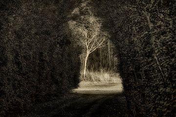 Mystical passage van Faucon Alexis